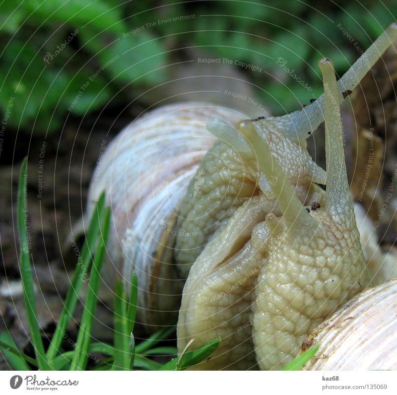 zu Dir oder zu mir ? grün schön Sommer Einsamkeit Tier Haus Wiese Gras Glück Wärme Park 2 Feste & Feiern Zusammensein Tierpaar paarweise
