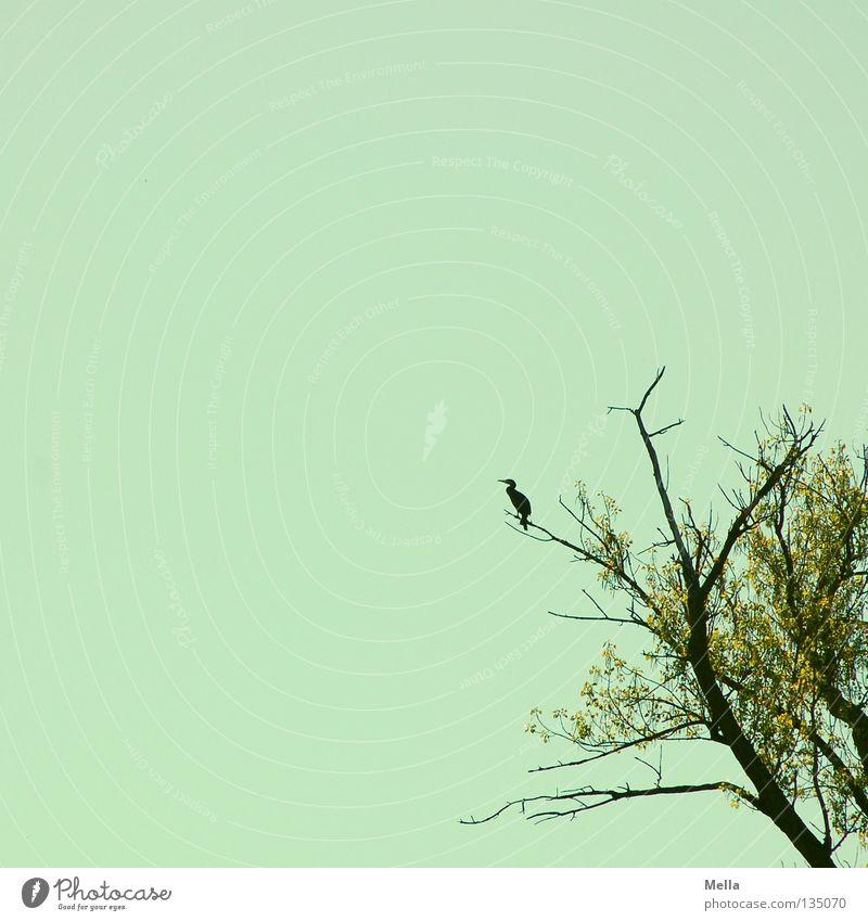 Die Reiher warten schon Natur Himmel Baum blau Blatt Frühling Freiheit Vogel Umwelt Suche frei sitzen Schutz beobachten Ast