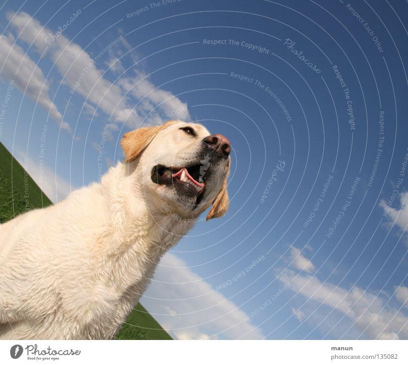 Tessa Himmel Hund grün schön Sommer Tier Wolken ruhig Wiese Freiheit hell Kraft blond Nase niedlich weich