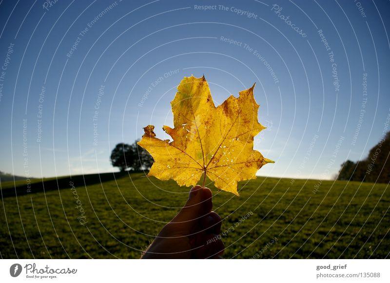 blatt in der sonne Blatt Ahorn gelb Herbst Sonne Hand Finger Daumen schön grün Gras Hügel Baum Gefäße Himmel Schönes Wetter Berge u. Gebirge Niveau glau