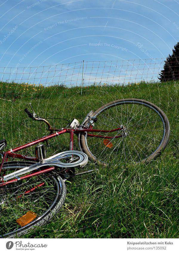 Wiederroller auf der Wiese Fahrrad Zaun Wiederkäuer Sommer Frühling Gras Ferien & Urlaub & Reisen Erholung Pedal grün Verkehr liegen Ausflug Rolle eingezäunt