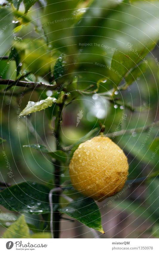 zitronenfrisch. Kunst Kunstwerk ästhetisch Zitrone Zitronenbaum Zitronensaft zitronengelb Zitronenblatt Zitronenschale Farbfoto Gedeckte Farben Außenaufnahme