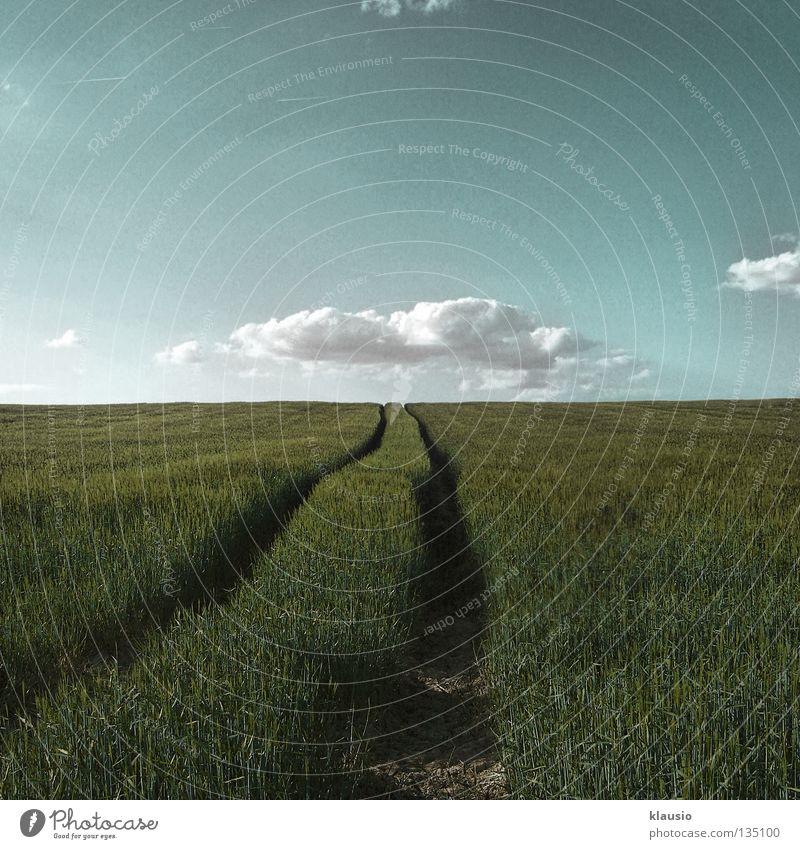 Unter den Wolken blau Sommer Wärme Feld Horizont Erde Spaziergang Physik Landwirtschaft Halm Traktor