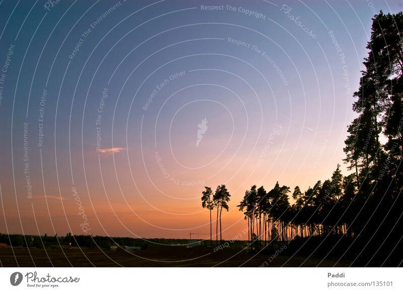 gestern in der Sandgrube Sonnenuntergang Abend Wolken mehrfarbig Panorama (Aussicht) traumhaft schön Gegenlicht Palme Baum rot gelb schwarz Verlauf Licht