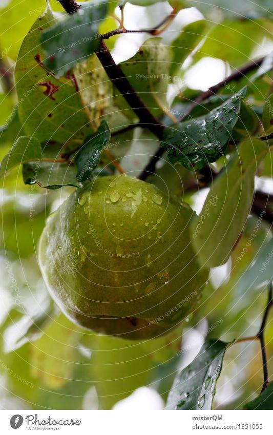 Der Apfel hält noch gut am Stamm. Natur Pflanze grün ästhetisch reif Apfelbaum Apfel der Erkenntnis Apfelernte Apfelsaft Apfelschale Apfelbaumblatt