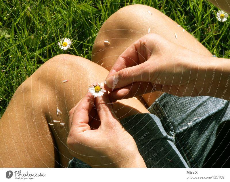 Er liebt mich nicht, er liebt mich... Frau Erwachsene Hand Finger Beine Blume Gras Blüte Wiese Denken träumen warten grün Verliebtheit Liebeskummer Sehnsucht