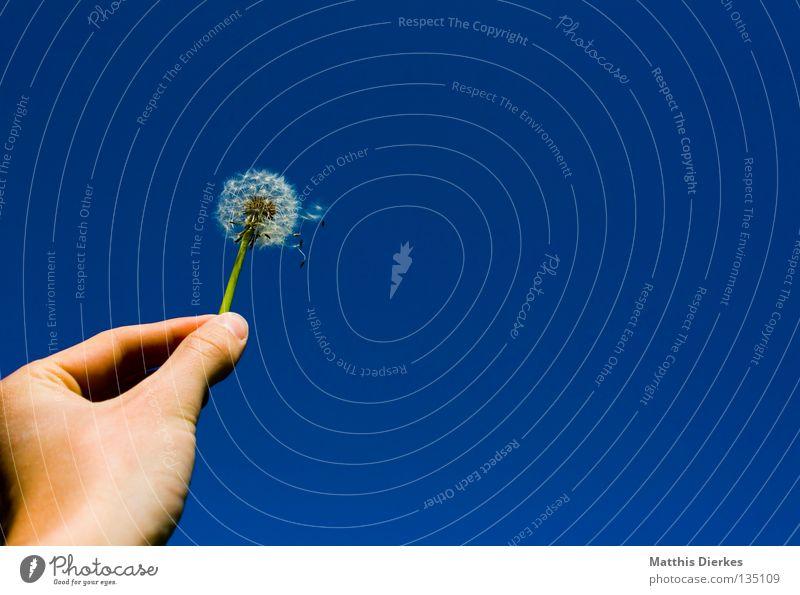 Pusteblume Himmel blau Hand Pflanze Blume Freude Leben Freiheit Blüte Luft Wind Finger festhalten Unendlichkeit zart Stengel