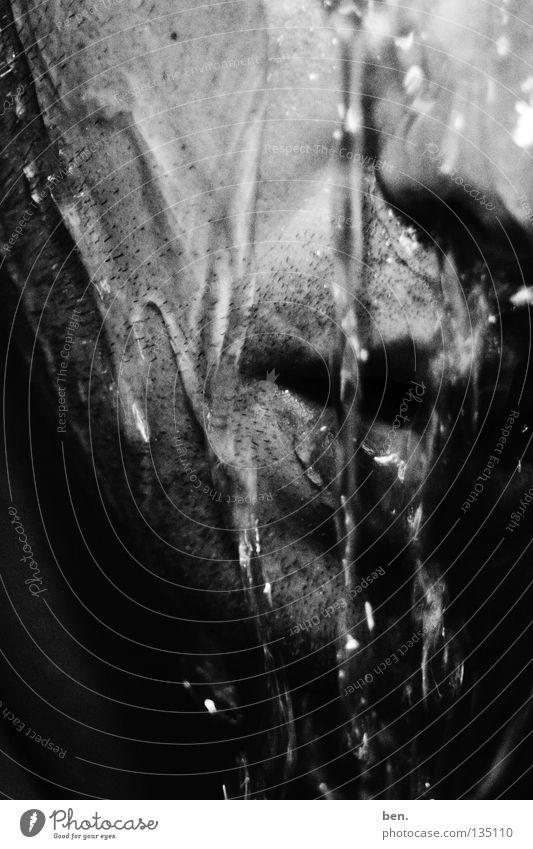 Kaltduscher Wasser Gesicht kalt Regen Wellen Eis Kraft nass Wassertropfen Schwimmen & Baden Kraft frisch Bad tauchen Flüssigkeit feucht