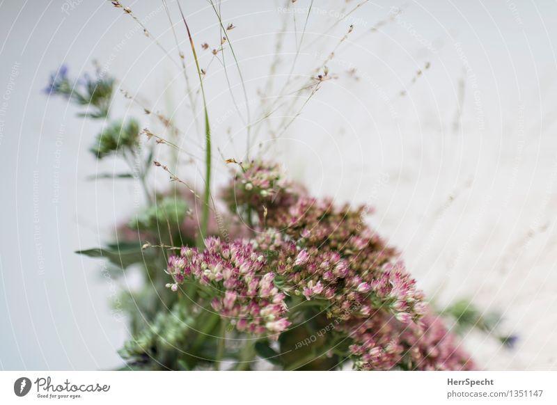 Gebüsch Pflanze schön Blume natürlich frisch Sträucher Neigung Blumenstrauß Wiesenblume