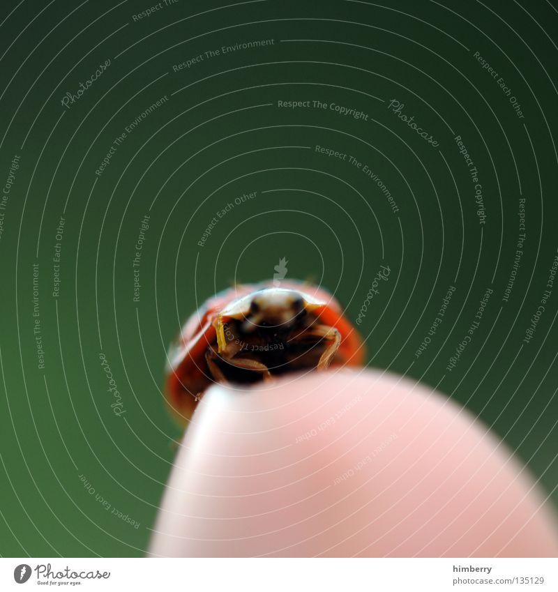 maraike sagt hi Mai Marienkäfer Tier Schiffsbug Finger klein Natur grün Zoo Insekt gehen wegfahren Sommer Makroaufnahme Nahaufnahme Käfer animal ladybug fliegen