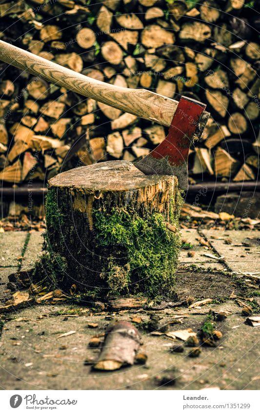 Axt Baum rot Wald Herbst Holz braun Arbeit & Erwerbstätigkeit authentisch Abenteuer Landwirtschaft Beruf Handwerk Inspiration machen Identität Forstwirtschaft