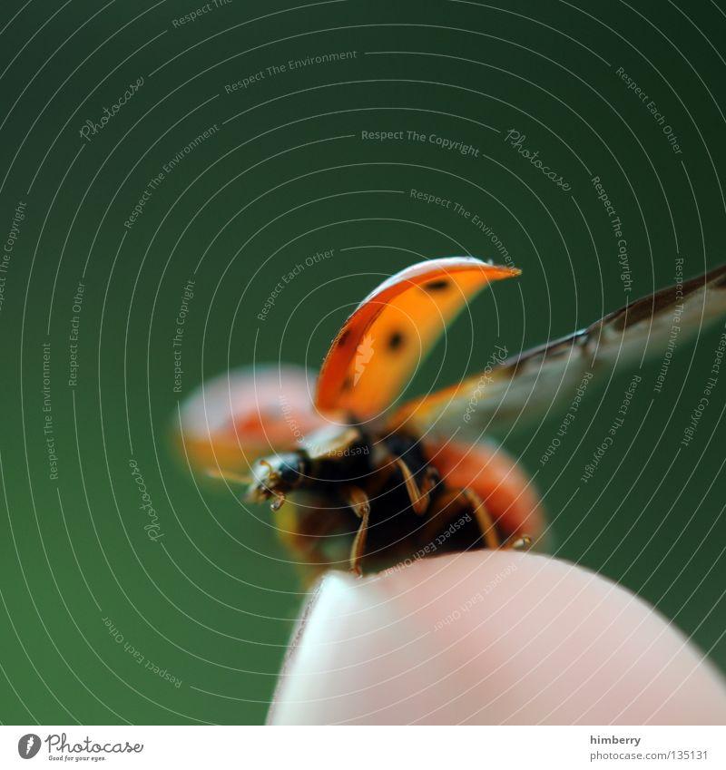 maraike haut lieber ab Mai Marienkäfer Tier Schiffsbug Finger klein Natur grün Abheben Zoo Insekt gehen wegfahren Sommer Makroaufnahme Nahaufnahme Käfer animal