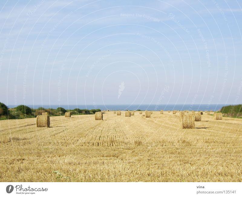 goldene Weite Strohballen ruhig Meer Weizenfeld Herbst Küste Normandie Feld Sommer Dürre Arbeit & Erwerbstätigkeit Frankreich Ferne Ernte