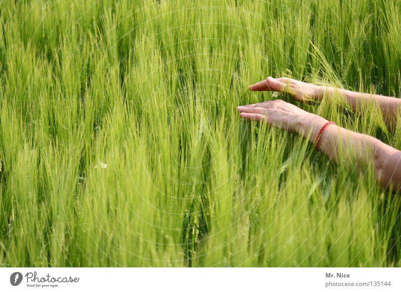 touch Mensch Frau Natur grün Sommer Hand Gefühle Gesundheit 2 Feld Energiewirtschaft Kraft Finger weich Streifen berühren