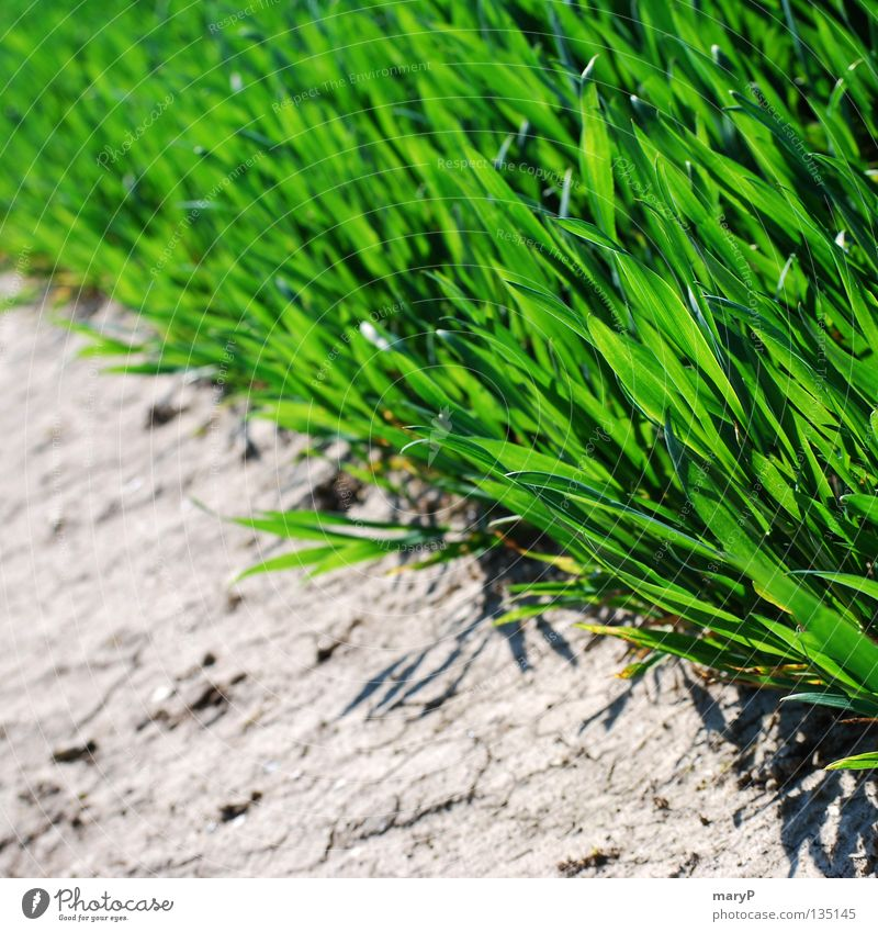 Das Grüne am Rande grün Sommer Leben Erholung Gras Stein Feld frisch