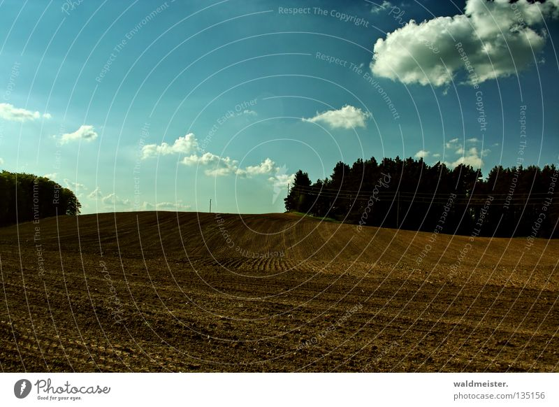 Feld im Frühling Mecklenburg-Vorpommern Ackerboden braun Baum Wald Wolken Herbst pflügen Traktorspur Landschaft Erde Bodenbelag Himmel umgepflügt