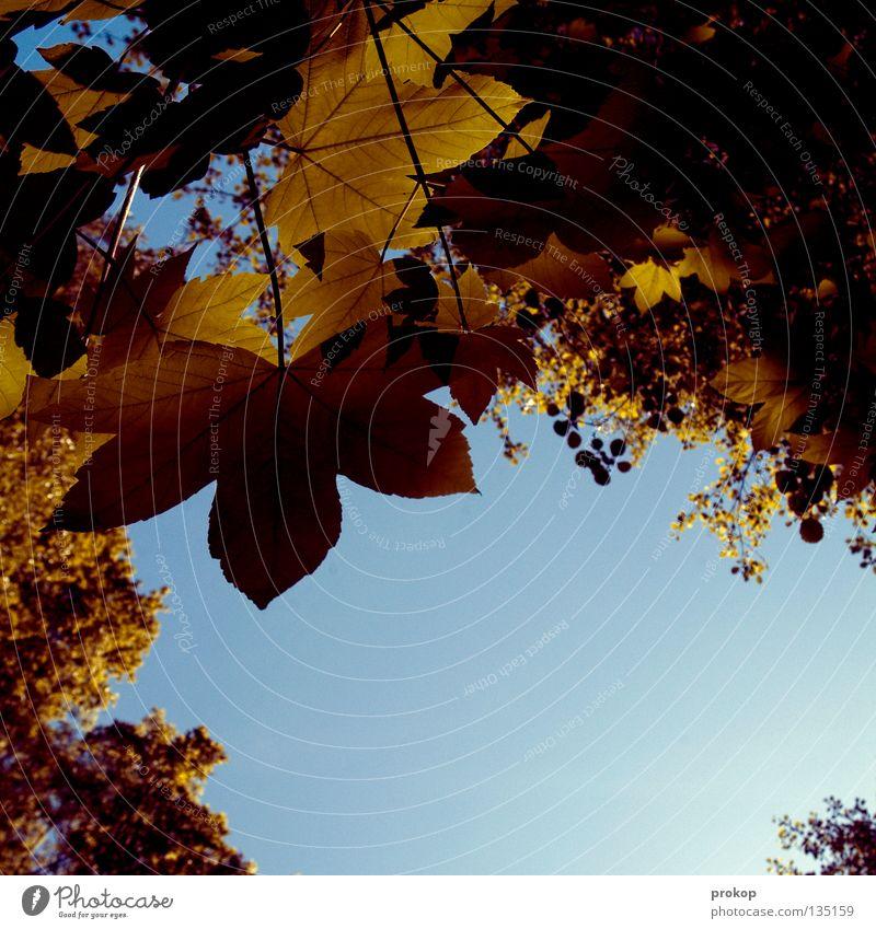 Softcopy Natur Himmel Baum grün Sommer Blatt Wolken Ast Vertrauen Schönes Wetter Gefäße Geäst