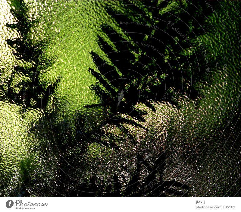 Das Fenster zum Hof Natur schön Baum Pflanze dunkel hell Glas Ast Tanne Fensterscheibe Zweig Nadelbaum Tannennadel Eibe