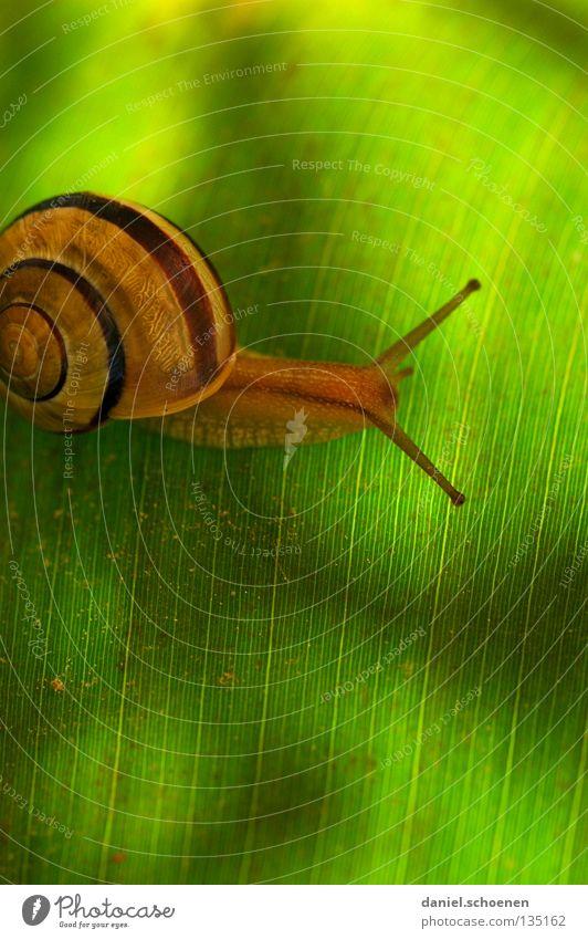 wohn-mobil 2 grün Blatt Haus Farbe Bewegung Frühling Gebäude Hintergrundbild Güterverkehr & Logistik Häusliches Leben Mobilität Schnecke Spirale krabbeln
