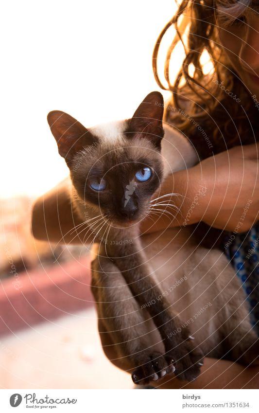 und deine blauen Augen..... feminin Kind 1 Mensch 3-8 Jahre Kindheit 8-13 Jahre brünett langhaarig Haustier Katze Tier beobachten festhalten hängen Blick tragen