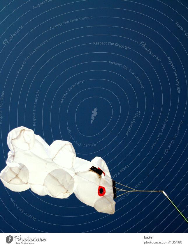 Bärchen flieg! Himmel weiß blau Strand Meer Einsamkeit Erholung Spielen Freiheit Luft Wind Freizeit & Hobby Kindheit fliegen Seil frei