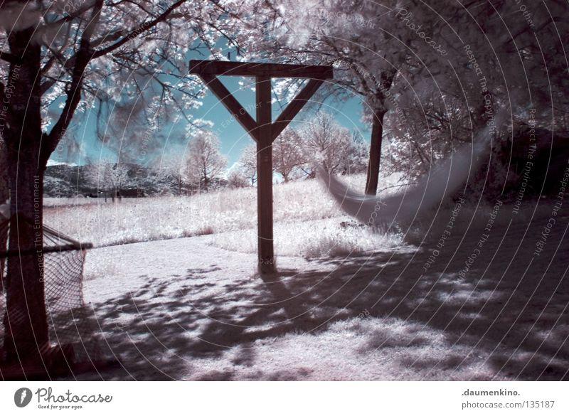 weißes Licht schön Himmel Baum Ferien & Urlaub & Reisen Blatt Schnee Erholung Wiese Gras Bewegung Garten träumen Park Landschaft Erde