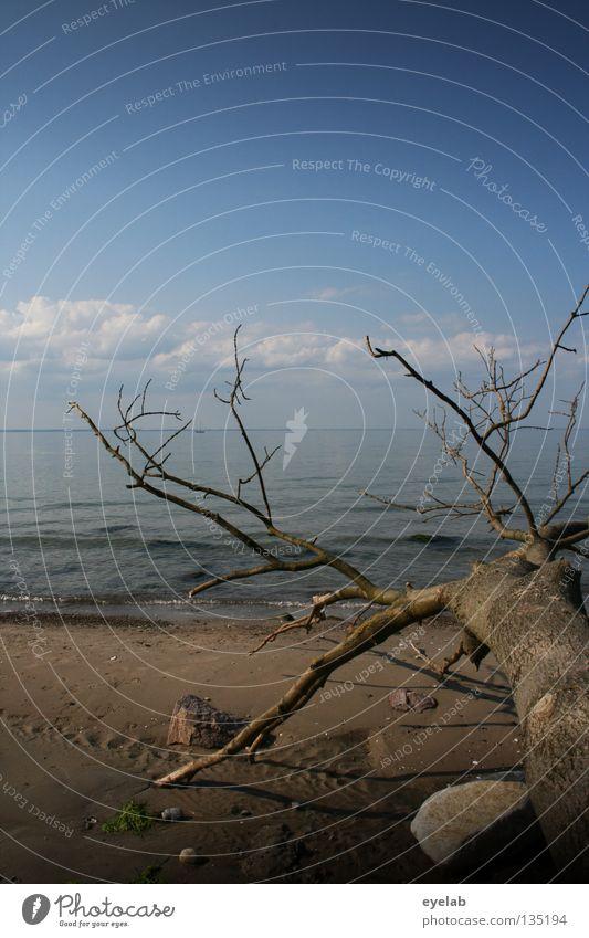Klima als solches ist noch keine Katastrophe Baum Strand Küste Tod Sträucher Sandstrand Meer See Wasserlinie Wolken Sommer laublos Ödland leer Horizont Wellen
