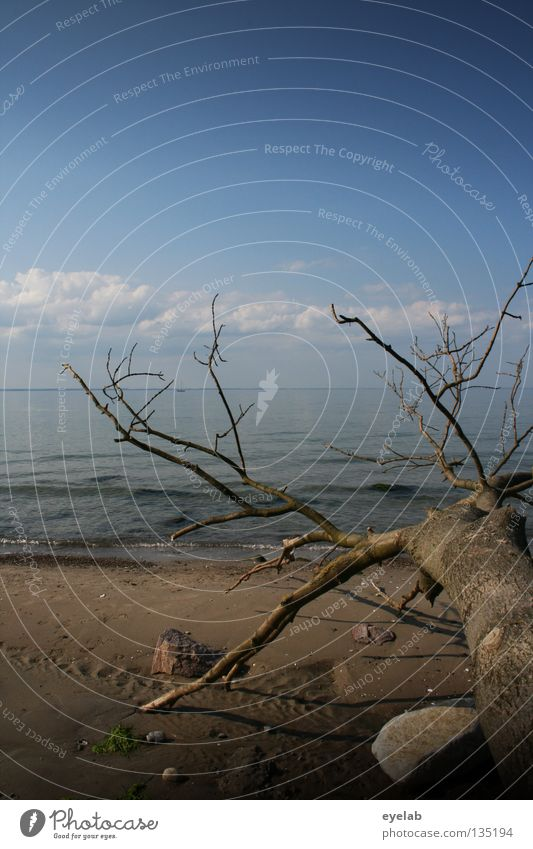 Klima als solches ist noch keine Katastrophe Himmel blau Wasser Baum Sommer Meer Strand Wolken Tod Küste Sand Stein See Horizont Erde Wellen