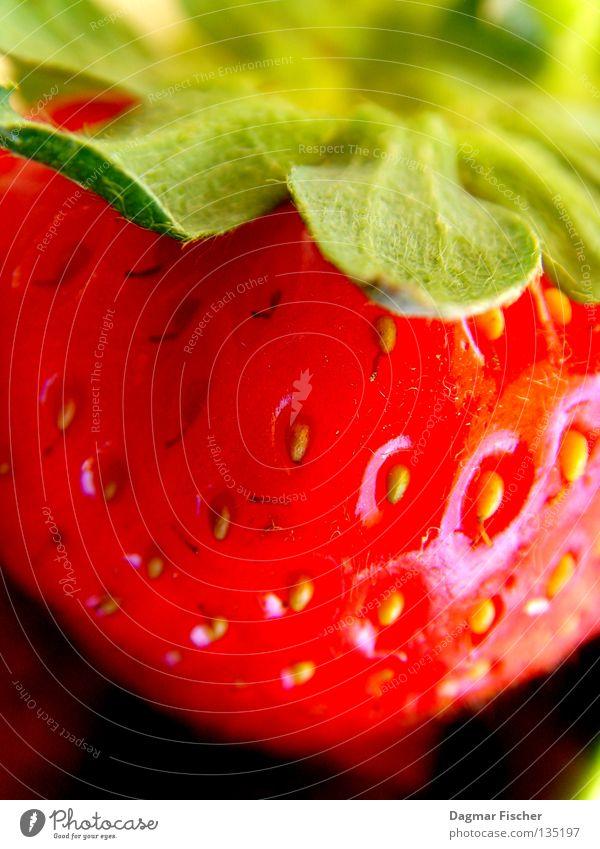 Ein Erdbeerchen grün Sommer Pflanze rot schwarz Leben Garten Gesundheit Frucht Lebensmittel Ernährung süß nah Gastronomie Lebensfreude Erfrischung