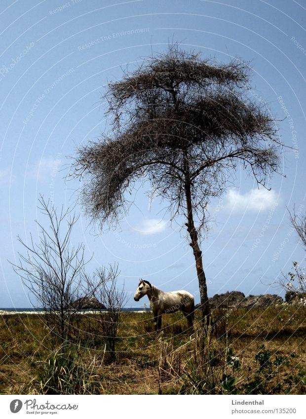Lonely White Horse Meer Pferd angekettet Baum Märchen fantastisch Strand weiß Säugetier Küste Schimmelpilze Felsen Himmel