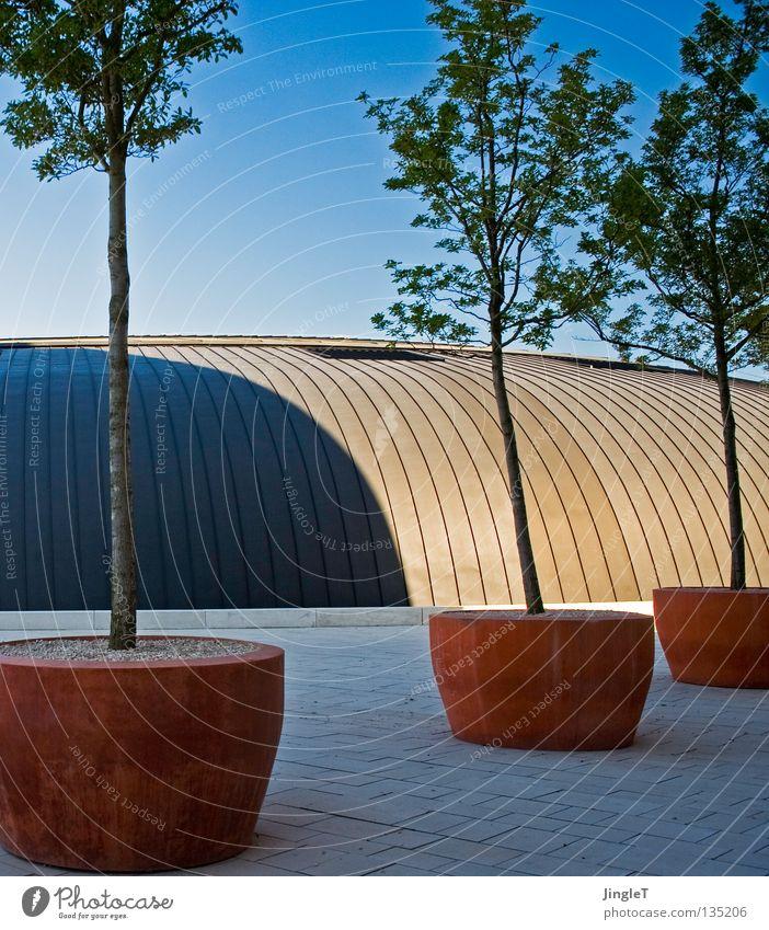 kühle mediterran Terrakotta Blumentopf Baum einzeln Kübel Platz Tonnengewölbe gekrümmt rund Dach Halbschatten Schönes Wetter attraktiv modern Metalldach