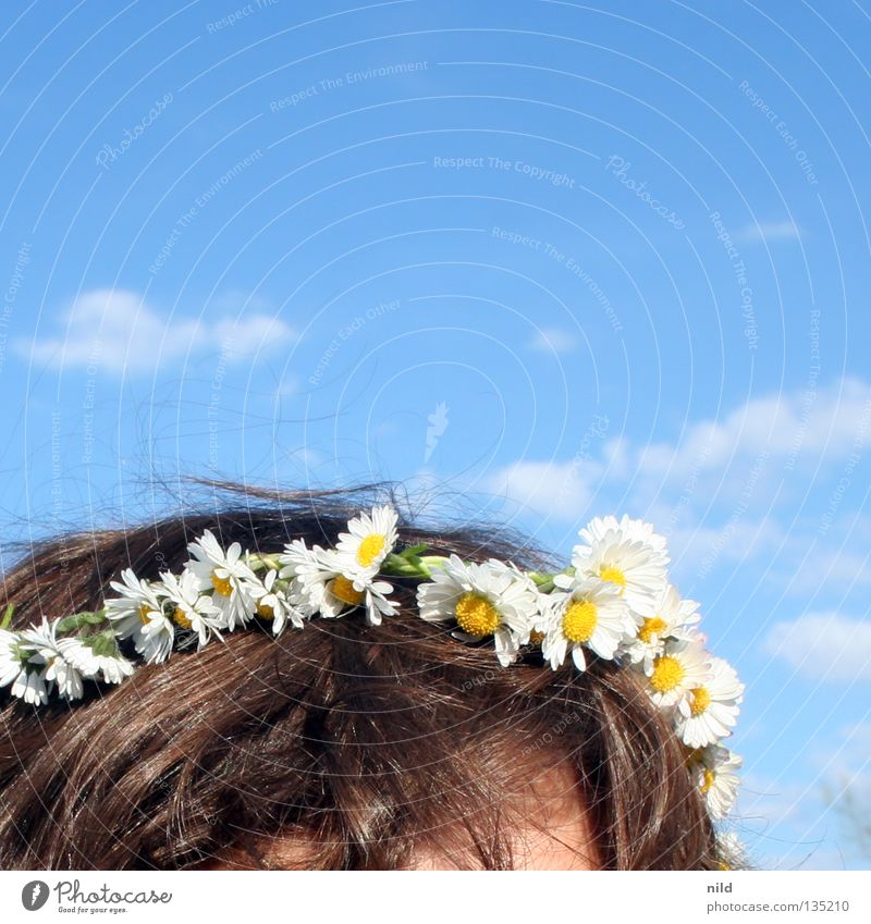Frühlinghochzwei Himmel weiß Blume blau Sommer Blüte Frühling Haare & Frisuren Kopf Dekoration & Verzierung zart Schönes Wetter Gänseblümchen Baumkrone himmelblau Wiesenblume