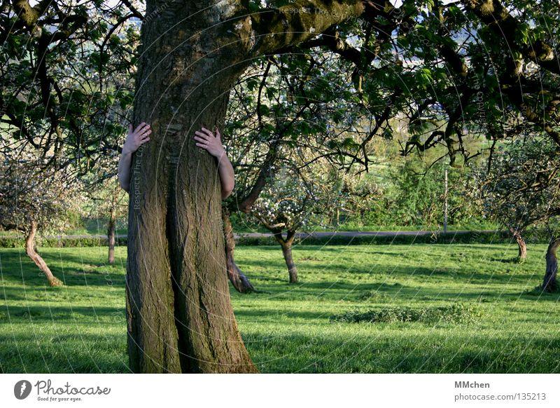 Mein Freund, der Baaaaaum Mensch Natur alt Baum Hand Blatt Blüte Gefühle Frühling Wiese Gras Garten Frucht Wachstum frisch Kraft
