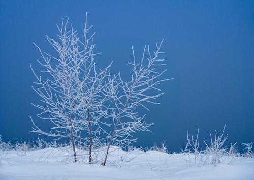 Winter Natur Baum Landschaft kalt Küste Idylle Sträucher Jahreszeiten Ostsee Mecklenburg-Vorpommern Usedom