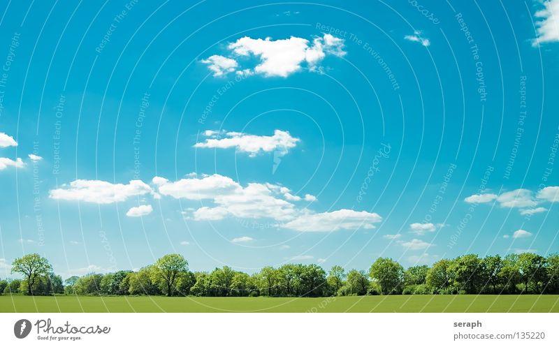Open Range Natur Himmel Baum Sonne Pflanze Sommer Wolken Erholung Wiese Fenster Gras Freiheit Landschaft Feld Hintergrundbild