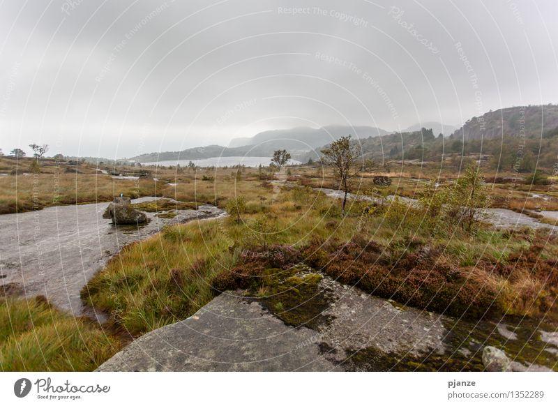 Herbst Erholung wandern Natur Landschaft Wolken schlechtes Wetter Wind Nebel Regen Baum Gras Sträucher Moos Wildpflanze Hügel Felsen Berge u. Gebirge Gipfel