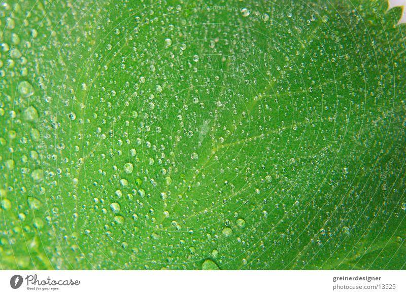 blatt mit tropfen Natur grün Blatt nass frisch feucht Oberfläche