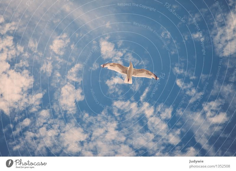 Ein Gefühl von Freiheit Himmel Ferien & Urlaub & Reisen Sommer Meer Erholung Wolken Tier Umwelt Bewegung natürlich Küste fliegen Vogel frei Kraft
