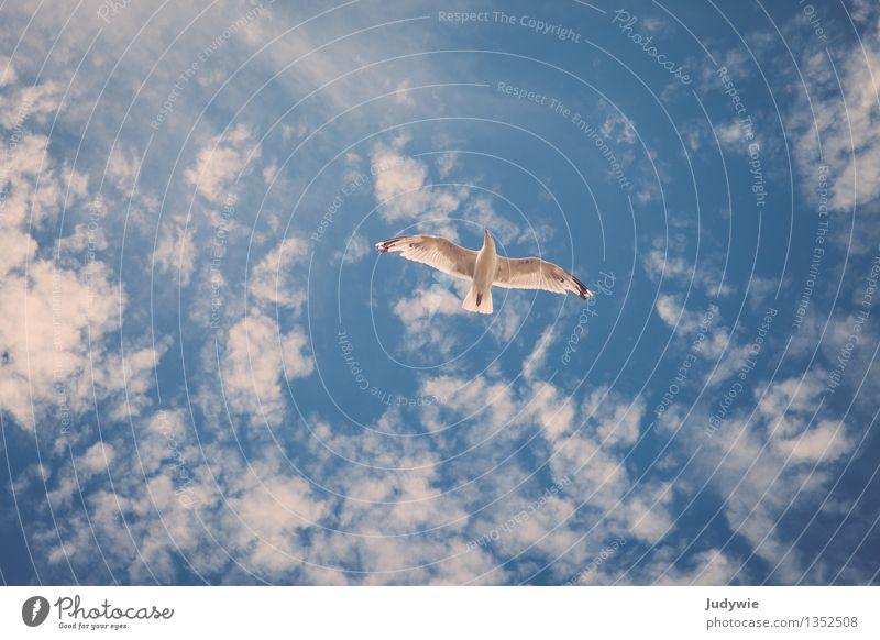 Ein Gefühl von Freiheit Umwelt Himmel nur Himmel Wolken Sommer Schönes Wetter Tier Wildtier Vogel Möwe Erholung fliegen frei natürlich sportlich Bewegung