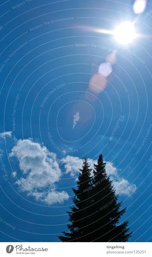 die drei oder vier himmelblau Sonnenstrahlen Physik Sommer Wolken Tanne Nadelbaum 2 schwarz Himmel Wärme Kontrast Silhouette
