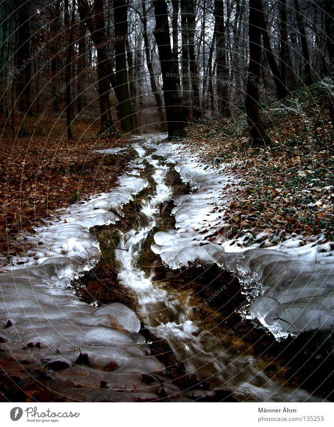 Eisbach... Natur Wasser Baum Winter Blatt Wald Schnee Landschaft Eis laufen Amerika Baumstamm Bach abwärts spritzen