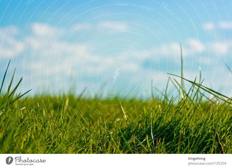 ordinary wiese Wiese Gras grün Horizont Wolken Halm nah unten Rasen Himmel blau Bodenbelag Natur