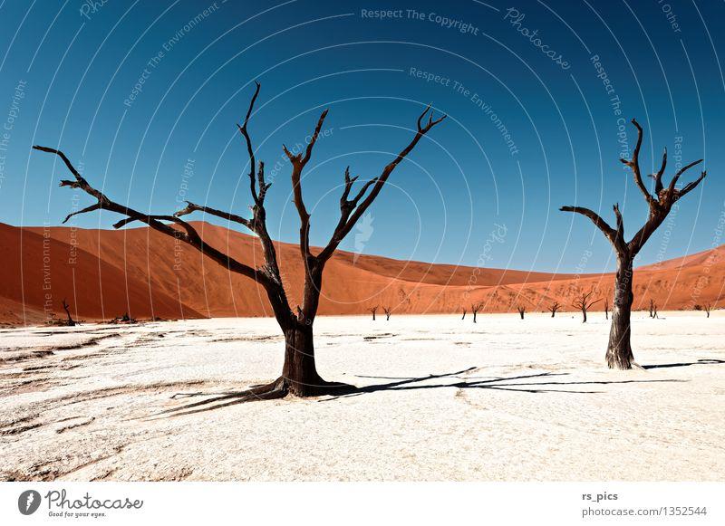 Dead Vlei Natur Landschaft Urelemente Sand Wolkenloser Himmel Einsamkeit Farbe geheimnisvoll Tod Vergänglichkeit Farbfoto Außenaufnahme Menschenleer Tag Licht