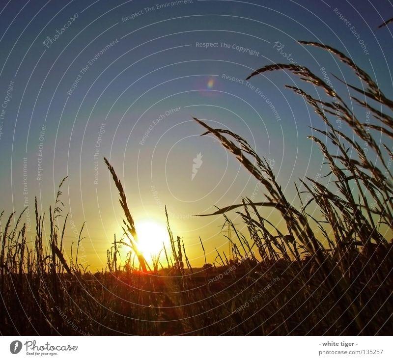 Zu später Stunde Himmel blau weiß schön rot Sonne Sommer gelb Feld Horizont Schönes Wetter Strommast Halm Abenddämmerung Ähren