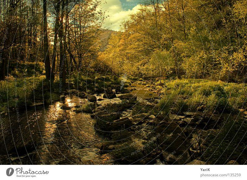 neuland Natur Wasser Himmel Baum Sonne grün blau Sommer Blatt schwarz Wald Leben Gras Frühling Stein Wärme