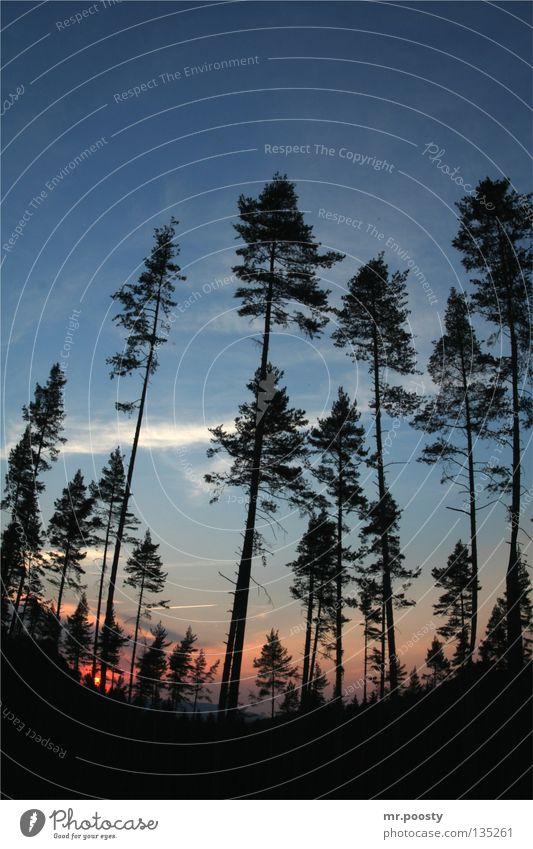 fallout forest Natur blau Ferien & Urlaub & Reisen schön Sommer Baum rot Sonne Einsamkeit Wolken ruhig Erholung Wald Landschaft Umwelt kalt