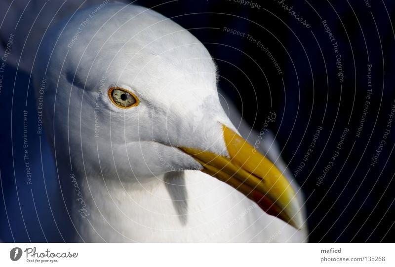 Selbstportrait weiß Meer rot gelb Auge grau fliegen Vogel Flügel Fisch Ostsee Nordsee Möwe Ei silber Dieb
