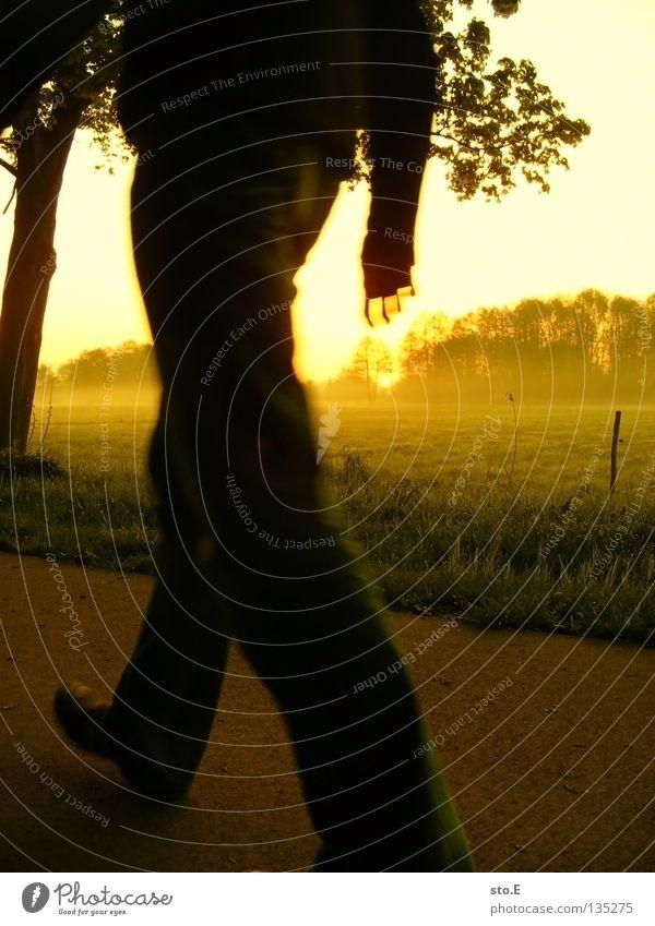 early morning | passenger crossing Morgen Sonnenaufgang aufgehen Pflanze schön ruhig Zufriedenheit Gelassenheit Landleben Wiese Feld Nebel Nebelbank Beleuchtung
