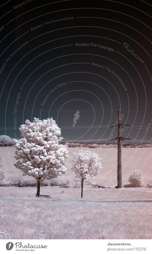die weiße moderene Wiese Gras Baum Blatt Personenzug Infrarotaufnahme fremd Ferien & Urlaub & Reisen träumen ungewiss traumhaft Farbinfrarot außergewöhnlich