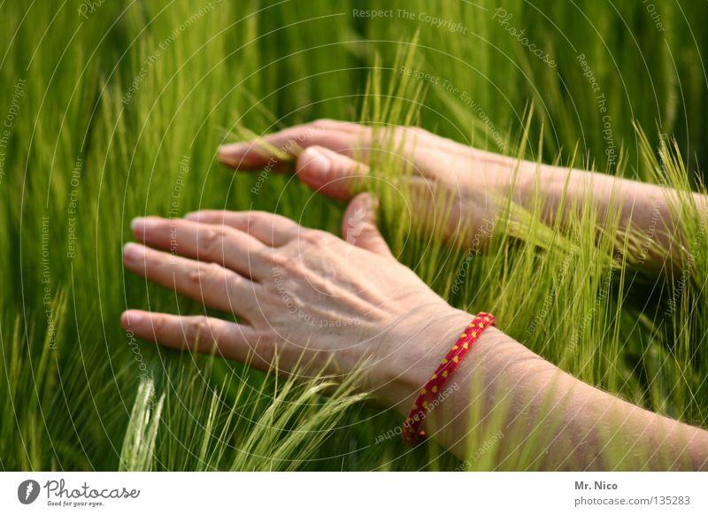 feel Feld Kornfeld Ähren Landwirtschaft schwingen weich Hand Finger Frau Reiki Spiritualität geben tanken berühren streichen Streifen Streicheln verbinden